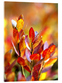 Akryylilasitaulu  Red bilberry leaves - Ric Ergenbright