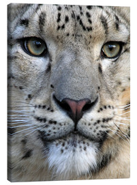 Canvas-taulu  snow leopard - Wolfgang Dufner