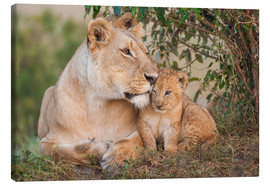 Canvas-taulu  Mother love at the lion - Ingo Gerlach
