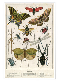 Juliste  Insects - English School