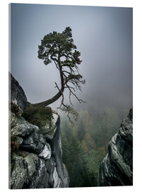 Akryylilasitaulu  Lonely Tree on the Brink - Andreas Wonisch