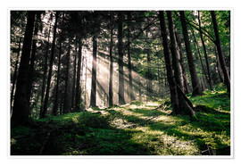 Juliste Light rays in the forest