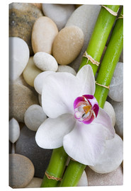 Canvas-taulu  Bamboo and orchid - Andrea Haase Foto