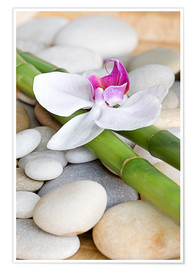 Juliste  Bamboo and orchid II - Andrea Haase Foto