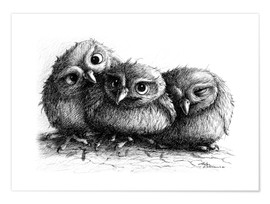 Juliste Three young owls - owlets
