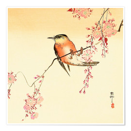 Juliste  Red Bird and Cherry Blossoms - Ohara Koson