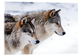 Akryylilasitaulu  Two Wolves in the snow - Louise Murray