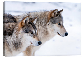 Canvas-taulu  Two Wolves in the snow - Louise Murray