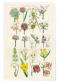 Juliste  Wildflowers - Sowerby Collection