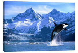 Canvas-taulu  Orca in front of a glacier - John Hyde