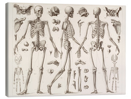 Canvas-taulu  Skeleton Of A Fully Grown Human - Wunderkammer Collection