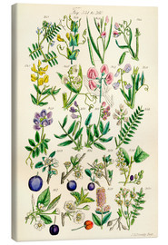 Canvas-taulu  Wildflowers - Sowerby Collection
