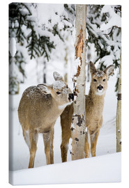 Canvas-taulu  Deers in a winter forest - Michael Interisano