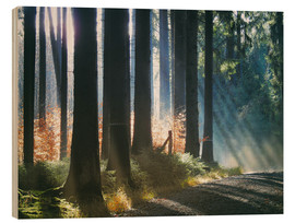 Puutaulu  Morning Light in the Forrest - Martina Cross