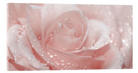 Akryylilasitaulu  Rose with drops - Atteloi