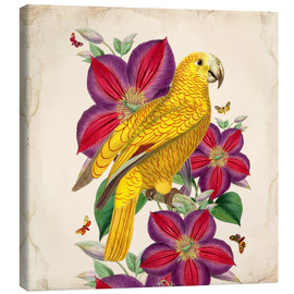 Canvas-taulu  Oh My Parrot V - Mandy Reinmuth