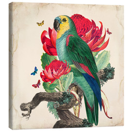 Canvas-taulu  Oh My Parrot X - Mandy Reinmuth
