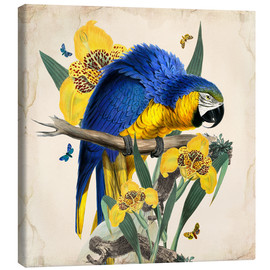 Canvas-taulu  Oh My Parrot IX - Mandy Reinmuth