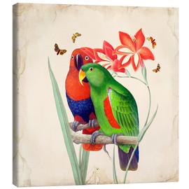 Canvas-taulu  Oh My Parrot I - Mandy Reinmuth