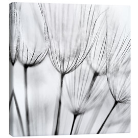 Canvas-taulu  Black and white dandelion