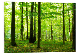PVC-taulu  Sunlight in the green forest