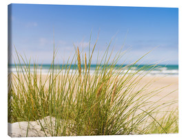 Canvas-taulu  Beach with dune grass in sand