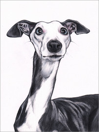 Akryylilasitaulu  Whippet, blue and white - Jim Griffiths