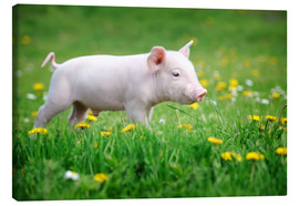 Canvas-taulu  Piglets on a spring meadow