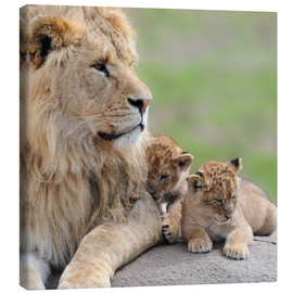 Canvas-taulu  Young lions