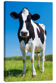 Canvas-taulu  Cow - Black and White