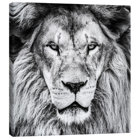 Canvas-taulu  King Lion - black and white