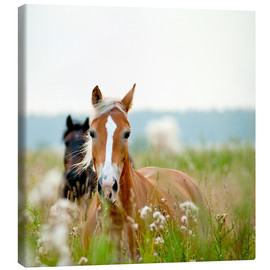 Canvas-taulu  Haflinger with wildflowers