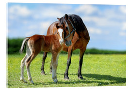 Akryylilasitaulu  Mother Love - mare with foal
