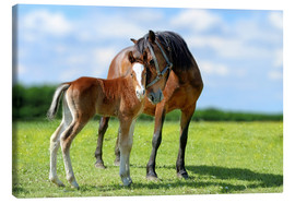 Canvas-taulu  Mother Love - mare with foal