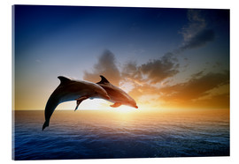 Akryylilasitaulu  Dolphins in the sunset