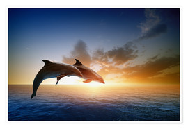 Juliste  Dolphins in the sunset