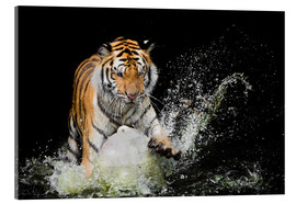 Akryylilasitaulu  Tiger Makes the water