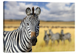 Canvas-taulu  View of zebras