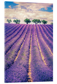 Akryylilasitaulu  Lavender field with trees in Provence, France