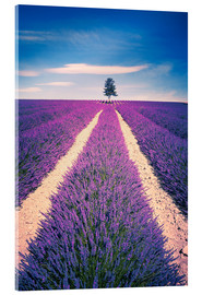 Akryylilasitaulu  Lavender field with tree in Provence, France