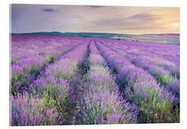 Akryylilasitaulu  Lavender Meadow at sunset