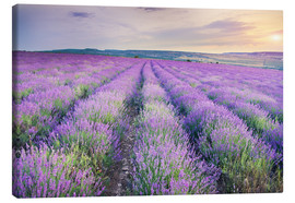 Canvas-taulu  Lavender Meadow at sunset