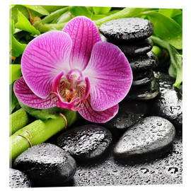 Akryylilasitaulu  Zen stones and pink orchid