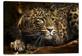 Canvas-taulu  Leopard on the lookout - Edith Albuschat