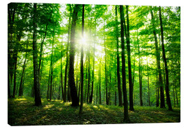 Canvas-taulu  Sunlight in the green forest, spring time