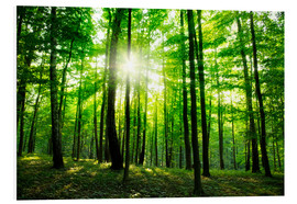 PVC-taulu  Sunlight in the green forest, spring time