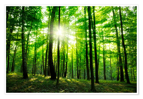 Juliste Sunlight in the green forest, spring time