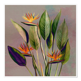 Juliste  Flamingo flower - strelitzia - Mandy Reinmuth
