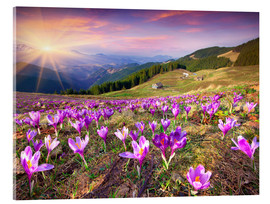 Akryylilasitaulu  Crocuses and the sun in spring