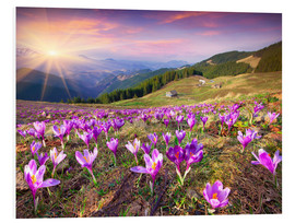 PVC-taulu  Crocuses and the sun in spring
